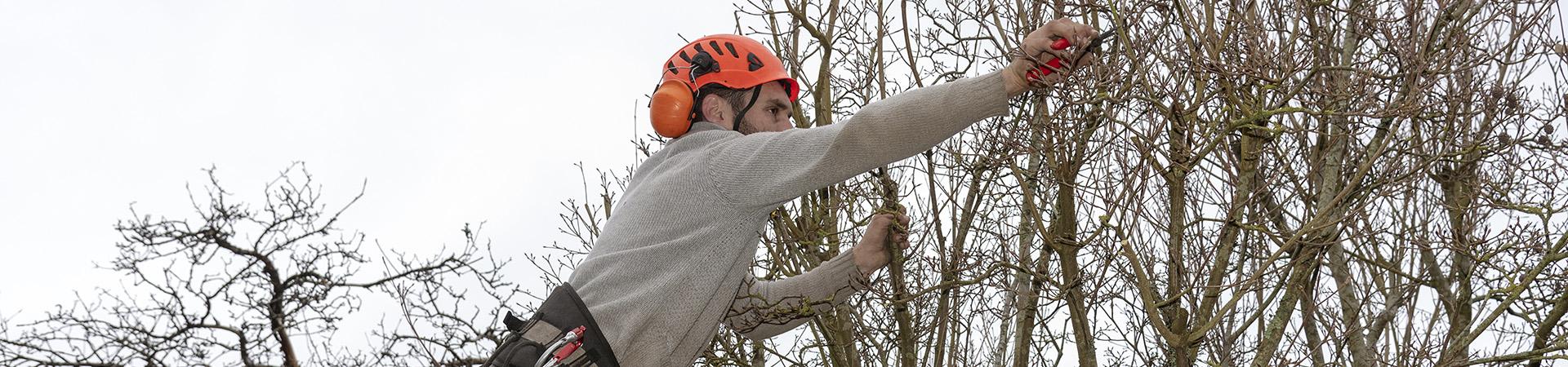 en man beskär ett träd.