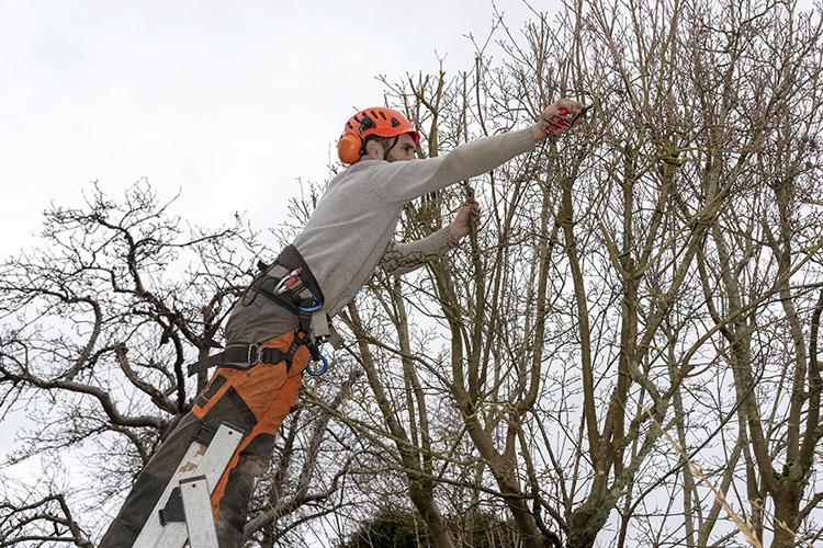en trädvårdare beskär ett fruktträd med en sekatör.