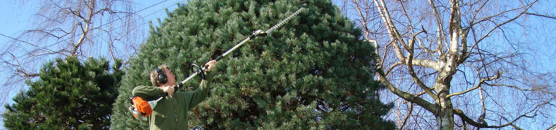 en beskärare med en stång häcksax, beskär en grön häck.