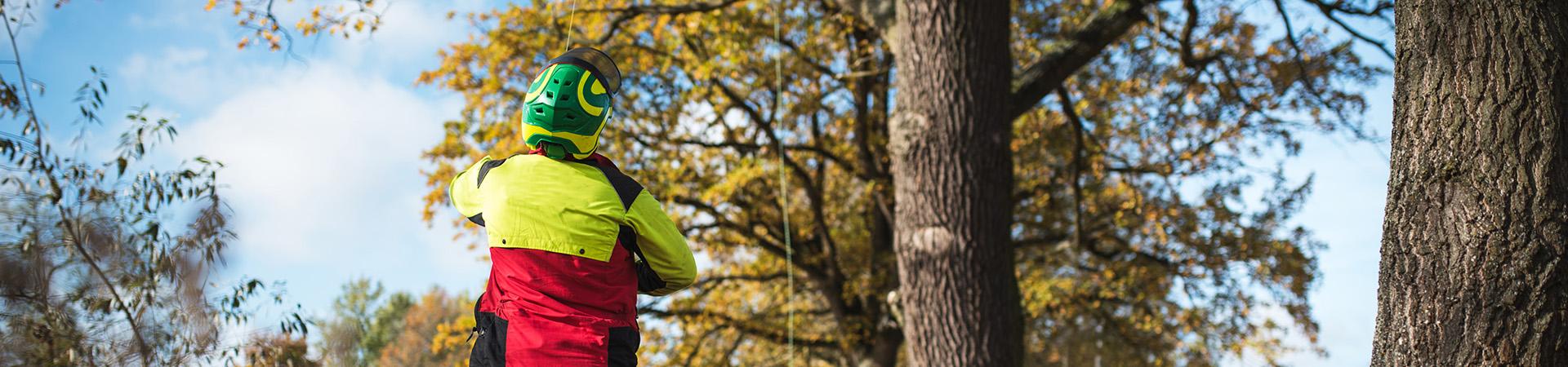 en trädvårdare med hjälm kastar upp en säkerhets lina i ett träd.