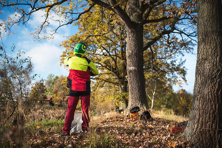 en arborist med hjälm och har kastat upp sina klätterlinor i ett träd.