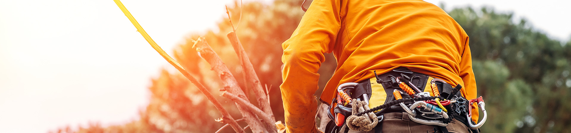 morgontid,en arborist beskär i en trädtopp, med säkerhets utrustning.